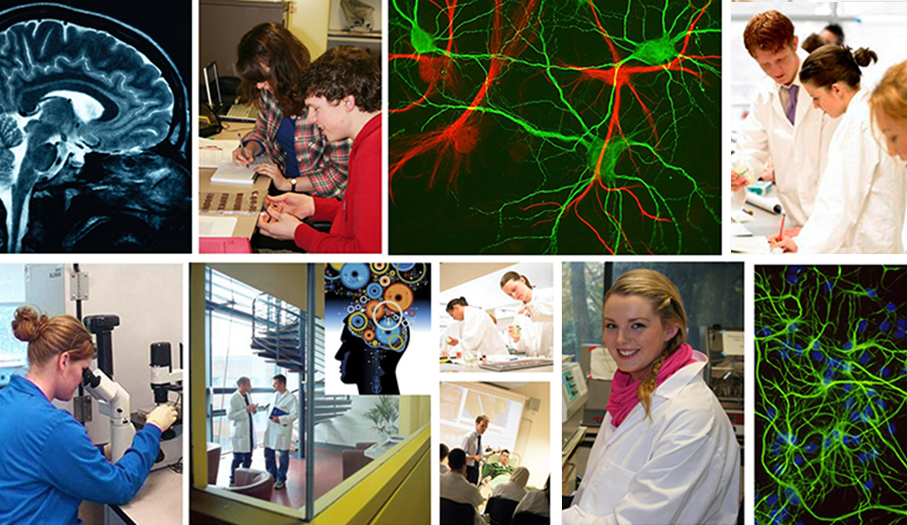 Welcome to the Department of Anatomy & Neuroscience Postgraduate pages