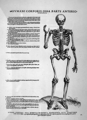 Vesalius\' Biography | University College Cork