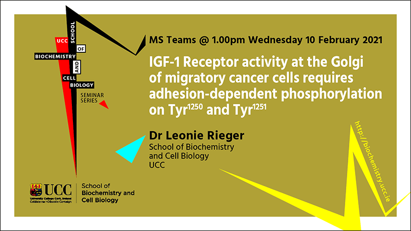2020-2021 School of Biochemistry and Cell Biology Seminar Series. SEMINAR TITLE: IGF-1 Receptor activity at the Golgi of migratory cancer cells requires adhesion-dependent phosphorylation on Tyr1250 and Tyr1251. SEMINAR SPEAKER: Dr Leonie Rieger, School of Biochemistry and Cell Biology, UCC. VENUE AND DATE: MS Teams @ 1.00pm Wednesday 10th February 2021. ACADEMIC HOST: School of Biochemistry and Cell Biology.