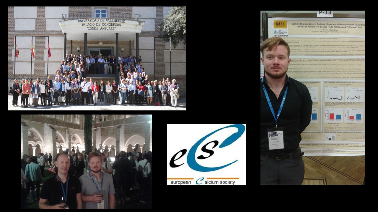 The XIV International Meeting of the European Calcium Society in Valladolid, Spain