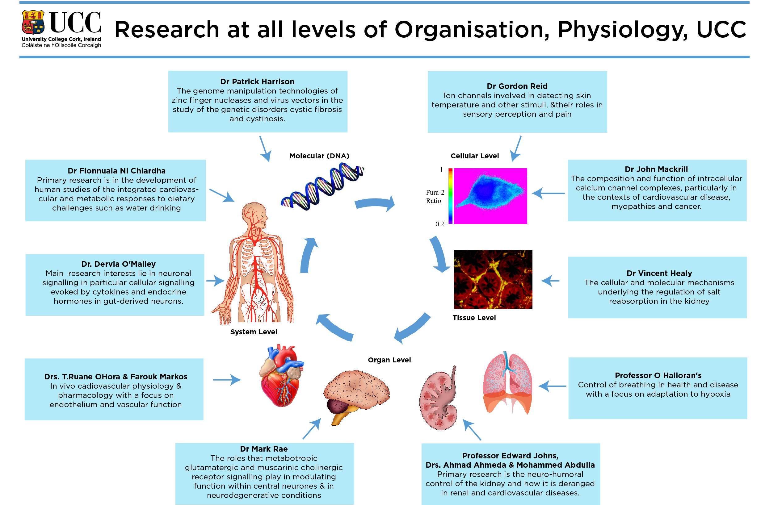 Coreresearchareas additionally Pancreas also Mesh info as well Fulltext also Introduction To Restrictive Lung Diseases. on vascular system diseases