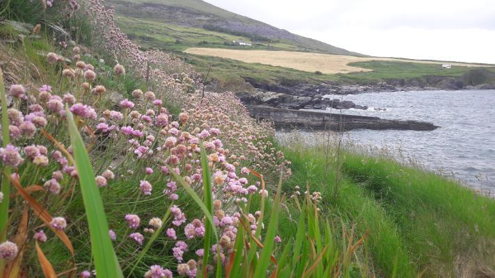 Connecting with communities of Iveragh Peninsula