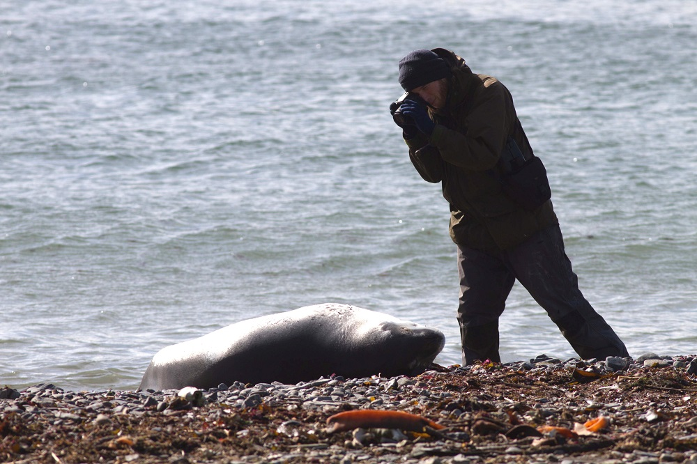 Saving Ireland's seals with GPS