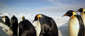 Penguin research the BEES knees on National Geographic and BBC