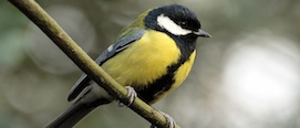 UCC research into clever birds
