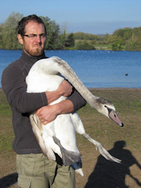 Anthony Caravaggi with a swan
