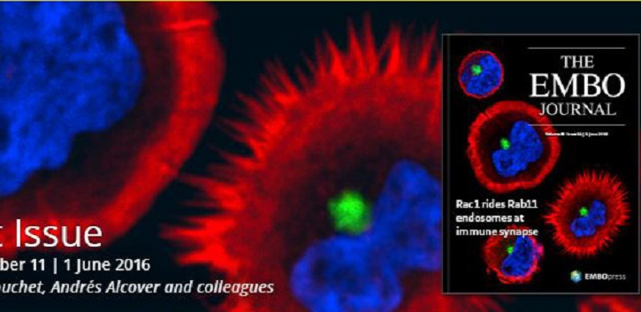 UCC research on cover of EMBO journal