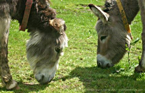 UCC Animal Welfare Donkey Sanctuary Trip...22nd March