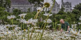 UCC Ranked as One of the Most 'Sustainable Universities' In The World