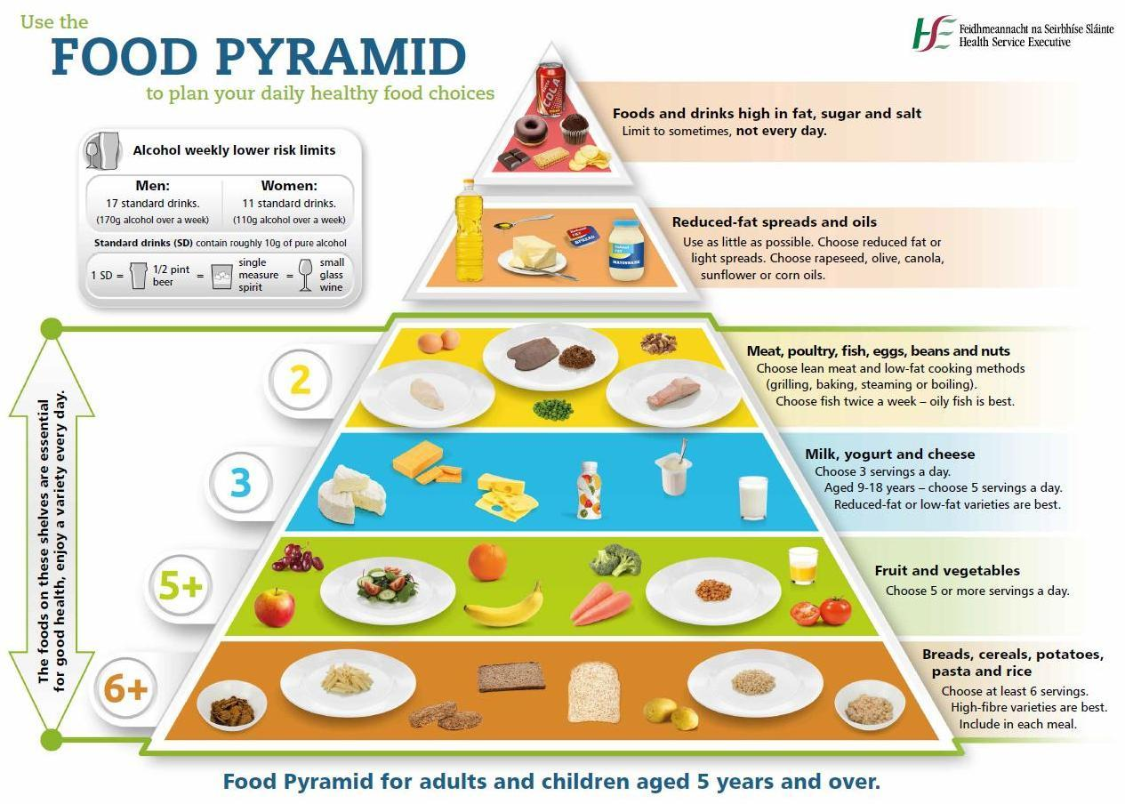 rebuilding food pyramid Developed in 1992, the food guide pyramid offers a general outline on how much a healthy person should eat each day from the five major food groups the pyramid is the main educational tool used.